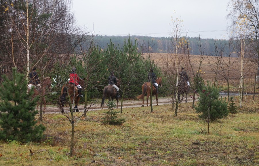 Zdjęcie koni opuszczających teren gospodarstwa