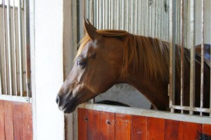 Photo of a horse - Dumka