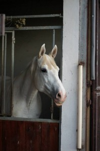 Photo of a horse - Bona