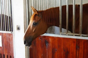 Photo of a horse - Andaluzja