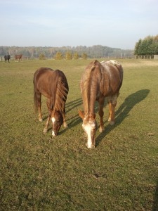 Photo of horses - Dumka i Pianola