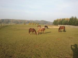 Zdjęcie koni